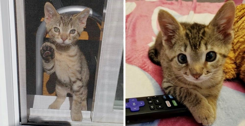 Kitten Blossoms into Quite the Character After He Was Rescued from the Street
