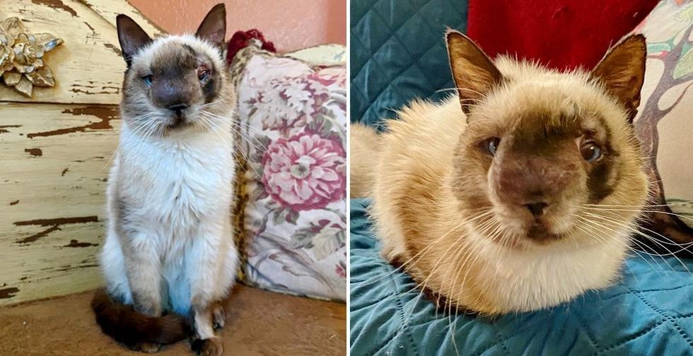 Cat with Sweetest Face and Gentle Heart Determined to Live Full Life After Being Found Abandoned