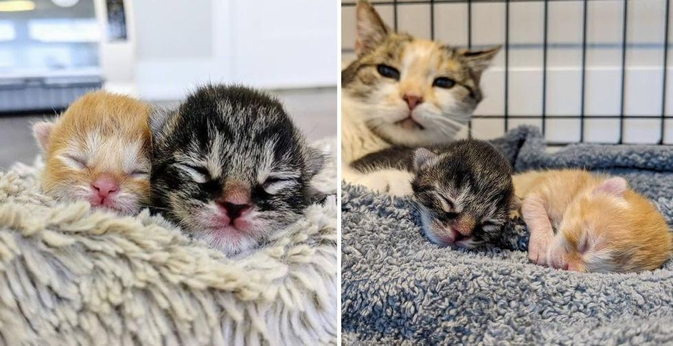 Kitten Reunited with His Sibling Who Was Born 3 Days Apart, They Help Each Other Thrive