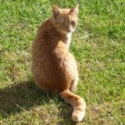 Cats4Cats